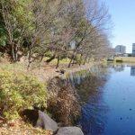 池ノ上駅は住みやすいですか?特徴・治安・家賃相場・評判などを教えて!