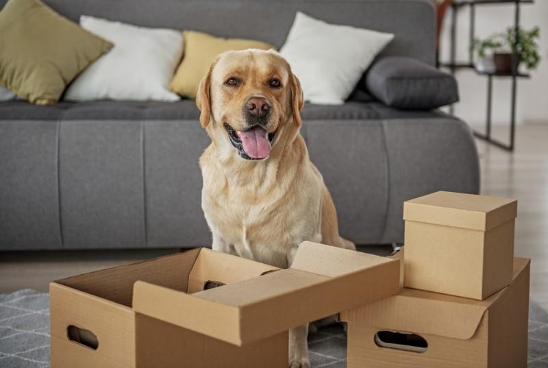 一人暮らしでもペットは飼える?部屋選びの注意点と賃貸物件でも飼いやすいペットを教えて!