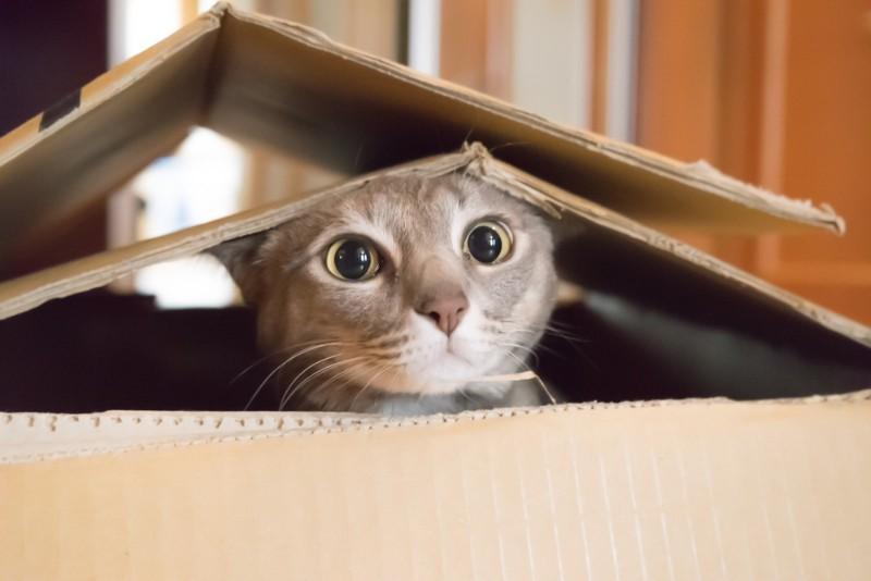 一人暮らし,猫