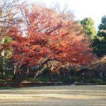富士見ヶ丘駅は住みやすいですか?特徴・治安・家賃相場・評判などを教えて!