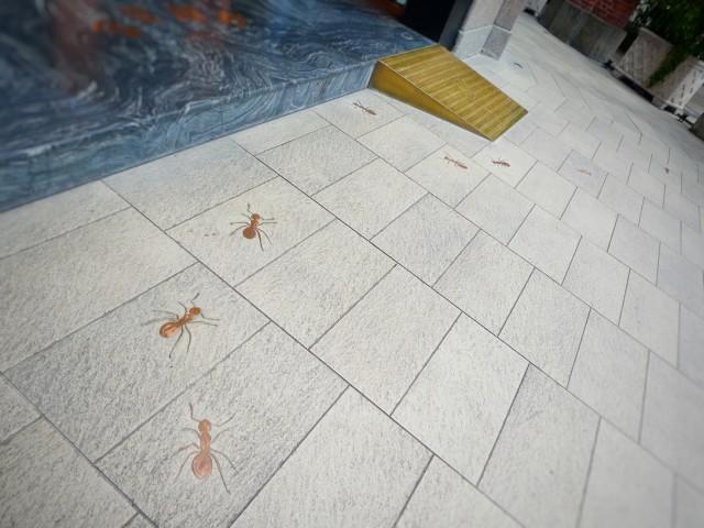 アパートで蟻が発生してしまったときの対処法