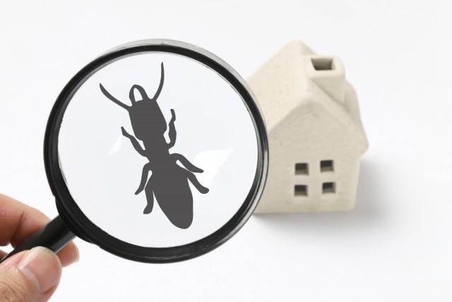 アパートで蟻を発見!対策と大量発生したときの対処法