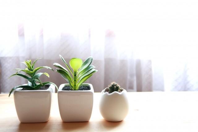 817 観葉植物