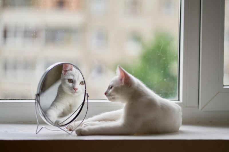 鏡をのぞいている猫