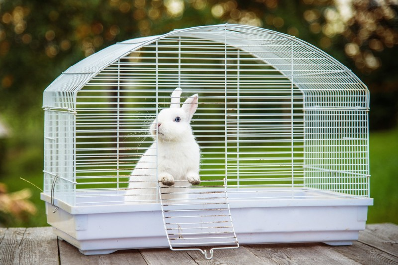 ゲージに入ったウサギ