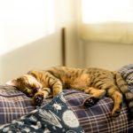 一人暮らしで猫を飼うには? 物件探し、猫との暮らしの注意点を解説