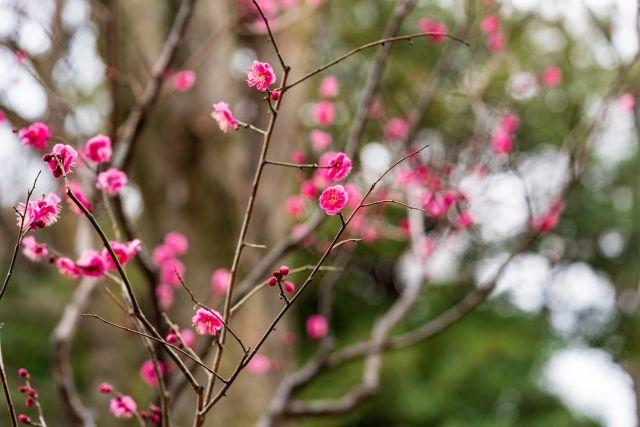 白山のイメージ(小石川植物園)